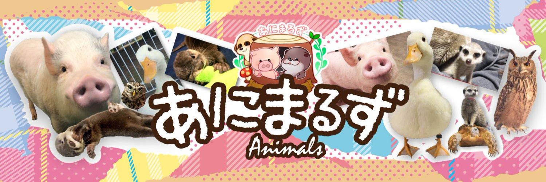 あにまるずのあいるん、飼っているカワウソがYouTubeで初「日本で公式なカワウソ」と承認