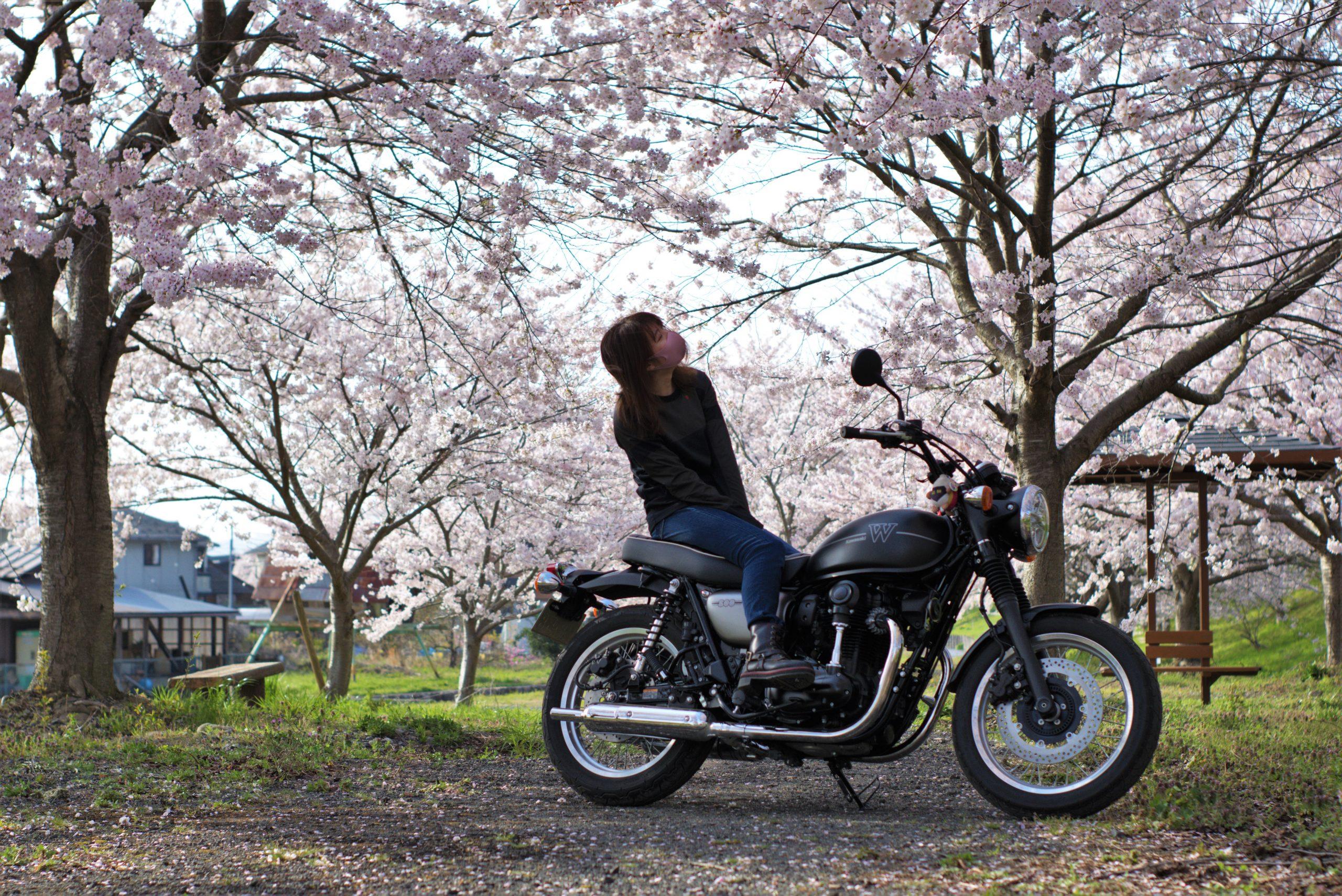 Mi-RIDER 桜とバイク