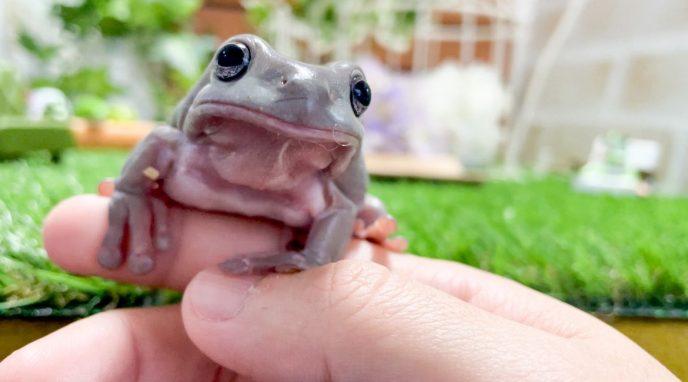 ヒトの指を甘噛みするカエル出現!?カエルの飼い慣らし方を伝授するYouTube動画が話題