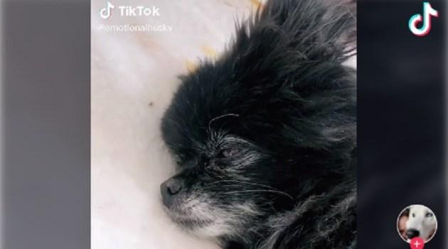<海外バイラル動画>愛犬が天国に行く前に… 飼い主の愛情あふれる動画が話題に